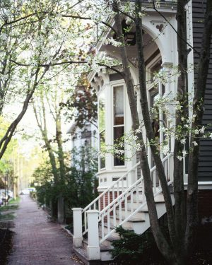 Print for Sale on Paige Gribb Photography - White Magnolia trees in bloom on a quiet street in Portland, Maine. Taken on medium format film